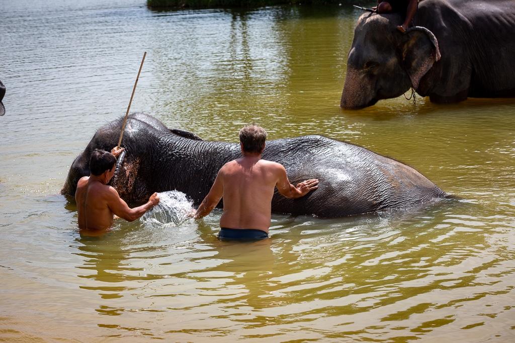 Elefanten baden - Mr. Moo Tours Khao Lak